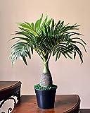 Ginni Bloom Artificial Bonsai Palm Tree