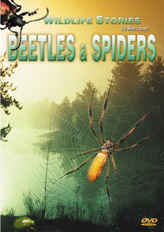 Wildlife Stories The Whole Story Beetles & Spiders