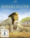 Animals in Love - Tierisch verliebt [Blu-ray]