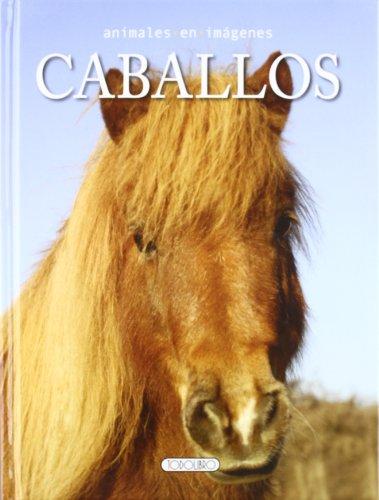 caballos-animales-en-imagenes