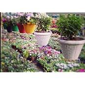 Minerva Naturals - JUHI HANGING Pot Set Of 4 Pcs.Multy Colors
