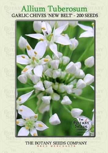 Allium Tuberosum 'New Belt' (200) Saatgut - Knoblauch-Schnittlauch 'New Belt' Samen [Chinese Leek 'New Belt']