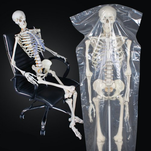 le corps humain le squelette. Black Bedroom Furniture Sets. Home Design Ideas