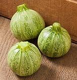 Zucchini Lucky 8 D3167 (Green) 25 Hybrid Seeds by David's Garden Seeds