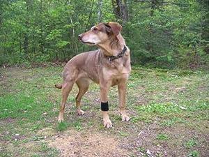 dog wrist wrap size large pet paw protectors pet supplies. Black Bedroom Furniture Sets. Home Design Ideas