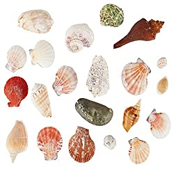 Sea Shells Mixed Beach Seashells - 250 Grams - Quality, Handpicked and Cleaned - Bag of Approx. 21 Seashells