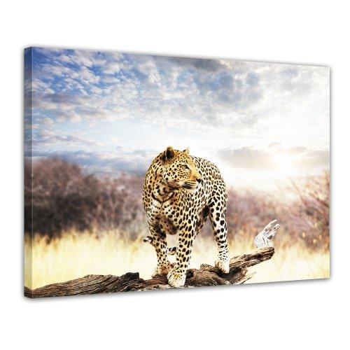 Bilderdepot24 Leinwandbild Leopard - 70x50 cm 1 teilig - fertig gerahmt, direkt vom Hersteller