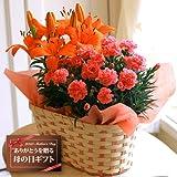 【送料無料!遅れてもうれしい母の日ギフト】ピンクカーネーション5号鉢とオレンジ百合5号鉢のセット