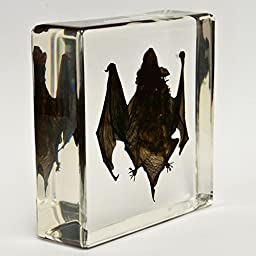 Real Bat in Acrylic Block - Small
