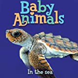 Baby Animals In the Sea