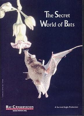 The Secret World of Bats