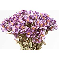 Alstroemeria, Crinkled, Purple, 24 Floral Sprays, 27 Inches High