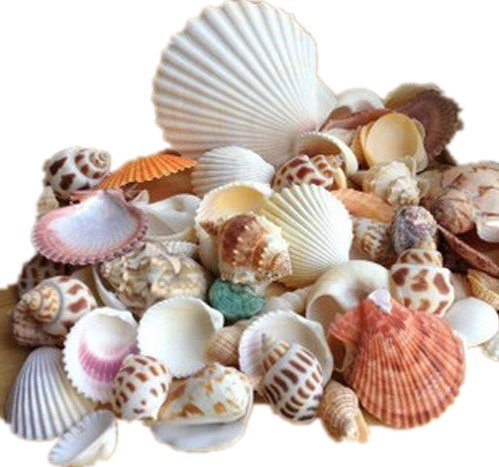 ardisle-beach-mixed-sea-shells-shell-craft-table-decor-aquarium-fish-tank-small-medium-by-ardisle