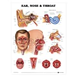 Ear, Nose & Throat Chart Styrene Plastic