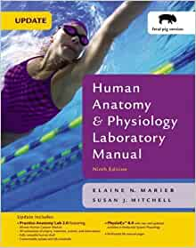 human anatomy and physiology 9th edition pdf free download