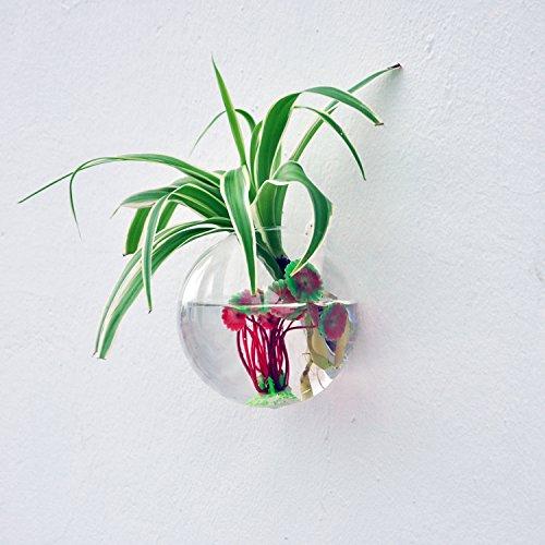 Vase en verre transparent mural forme de boule pour plante fleur d coration de maison les - Boule en verre pour plante ...