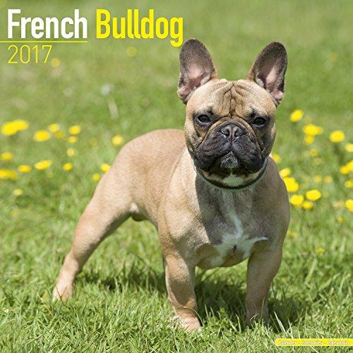 French Bulldog Calendar 2017 - Dog Breed Calendar - Wall Calendar 2016-2017 (French Bulldog Puppies Calendar compare prices)
