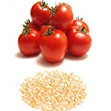 alkarty tomato seed