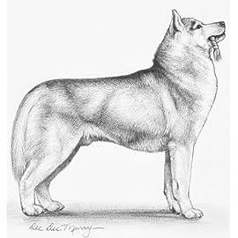 Laurelwood 2014 Siberian Husky Plate