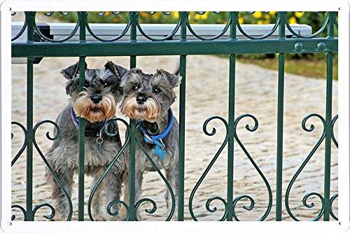 metallo-manifesto-piatto-decorazione-della-parete-targa-in-metallo-di-miniature-schnauzer-dogs-coupl