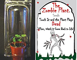 """(2) ZOMBIE PLANT CHRISTMAS GIFT or Birthday Party Favors - Touch it and it """"Plays DEAD"""" Minutes later it comes back to life! Great stocking stuffer! by TickleMe Plant Company, Inc"""