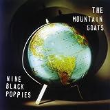 Nine Black Poppies