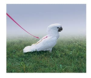 Premier Feather Tether Bird Harness, Petite, Electric Lime