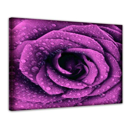 """Bilderdepot24 Leinwandbild """"Lila Rose mit Tropfen"""" - 70x50 cm 1 teilig - fertig gerahmt, direkt vom Hersteller"""