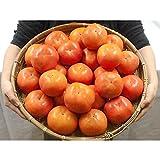 """和歌山県九度山産 """"富有柿"""" 秀品 2Lサイズ以上 約7.5kg【予約 11月発送予定】"""