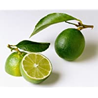 Everbearing Persian Lime Tree - Potted - Fruit Bearing Size - 8
