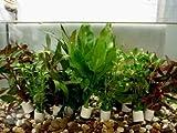 10 Bund verschiedene Aquariumpflanzen