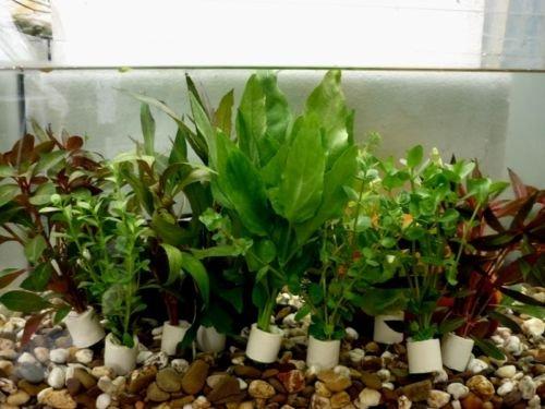 10-Bund-verschiedene-AquariumpflanzenWasserpflanzen