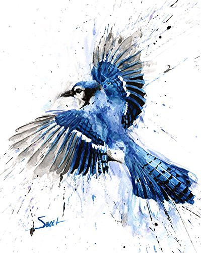 Blue Jay Bird Watercolor Print