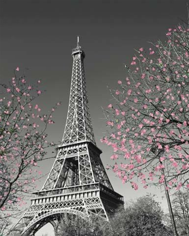 Paris Blossoms France Eiffel Tower Scenic Travel Poster 16 x 20 inches