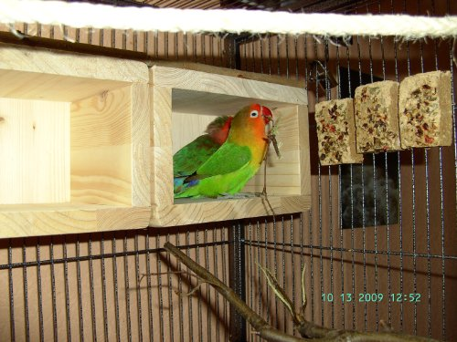Süßes VOGELHÄUSCHEN, Schlafhaus für den Vogelkäfig