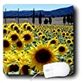3dRose LLC 8 x 8 x 0.25 Inches Mouse Pad, Sunflowers (mp_764_1)