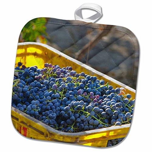 3drose-danita-delimont-grapes-cabernet-sauvignon-grapes-from-a-vineyard-china-8x8-potholder-phl-2087