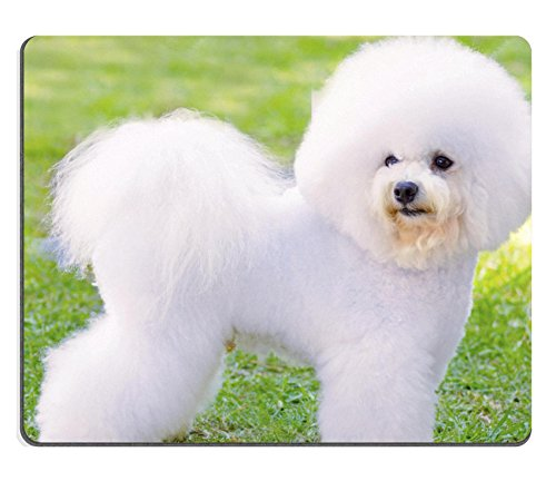 MSD Natural Rubber Mousepad A small beautiful and adorable white fluffy bichon frise dog standing on the lawn IMAGE 22996816 Stain Resistance Kit Kitchen Table Top Desk Coll (Kennel Tabletop compare prices)