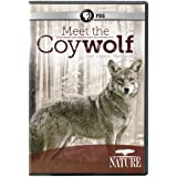 NATURE: Meet the Coywolf