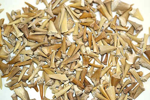 Bags of shark teeth mix