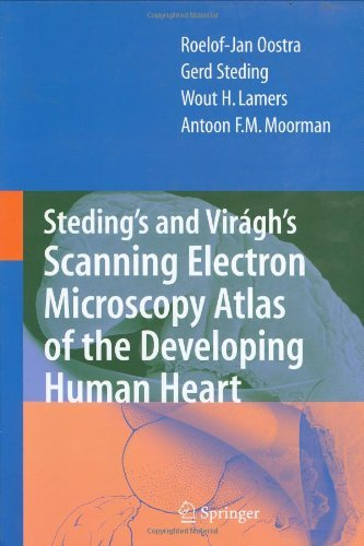 Steding'S And Virágh'S Scanning Electron Microscopy Atlas Of The Developing Human Heart