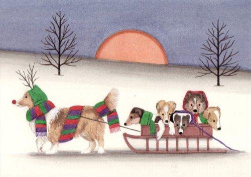 12 Christmas cards: Sheltie (shetland Sheepdog)