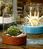 Terrariums & Cloches