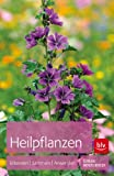 Heilpflanzen: Erkennen | Sammeln | Anwenden