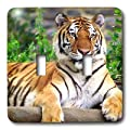 3dRose LLC lsp_3132_2 Siberian Tiger, Double Toggle Switch