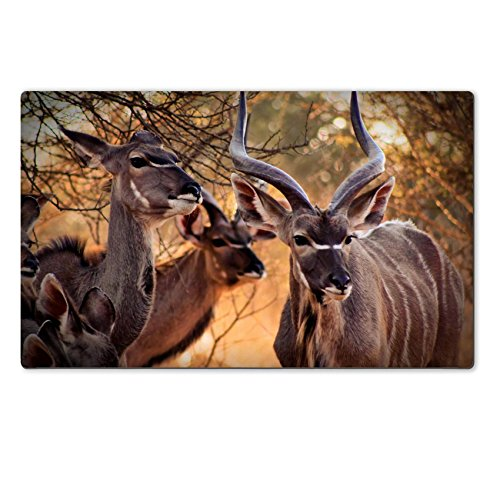 Liili Large Table Mat 28.4 x 17.7 x 0.2 inches Kudu Family Bull and Ewe in Bushveld Under Thorn Tree IMAGE ID 15012792 (Kudu Edge compare prices)