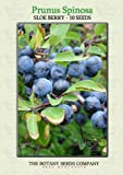 Sloe Berry (10) Seeds - Prunus Spinosa - Blackthorn