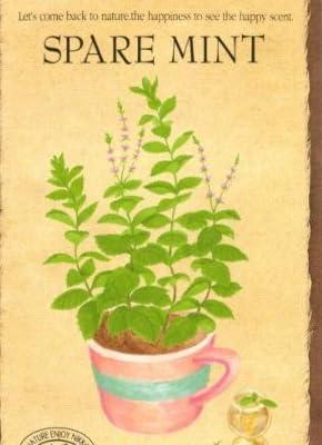 【種子】スペアミント [0822]