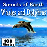 Whale Song and Blow Whole Sounds with Dolphin Chatter (Whales and Dolphins Ambience Sound Effects)