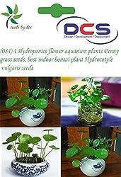 DCS(084) 4Pcs Hydroponics flower Aquarium plants Penny grass seeds, best indoor bonsai plant Hydrocotyle vulgaris seeds